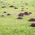 What Causes Piles of Dirt in Your Yard?