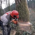 How to Fell a Tree in the Desired Direction