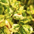 How to Diagnose Cause of Yellow Spots on Leaves