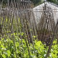 Vegetables to Grow on a Trellis