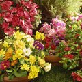 List of Monocot & Dicot Flowers