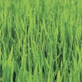 How to Grow Grass in Hard Dirt