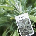 How to Trim a Purple Sage