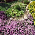The Best Groundcover for Full Sun and Clay Soil