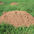 How to Kill a Ground Mole
