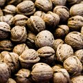 How to Sell Your Black Walnut Tree