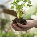 The Advantages of Geotropism in Roots