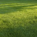 How Much Grass Seed Will I Need Per Square Foot?