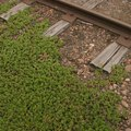 What Are the Dangers of Treated Railroad Ties?