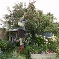 Fruit Trees Recommended for South Carolina