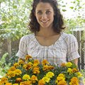 Good Flowers to Plant With Marigolds