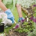 Epsom Salt to Control Vegetable Garden Pests