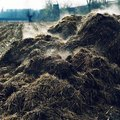 The Difference Between Composted and Dehydrated Cow Manure