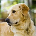 Are Queen Palm Tree Nuts Poisonous to Dogs?