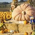 The Best Fertilizer for Growing Giant Pumpkins
