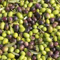How to Grow an Olive Tree From a Seed