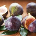 How to Care for an Indoor Fig Tree