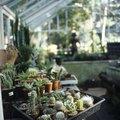 How to Grow a Mini Cactus