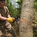 How to Clear Woods for Lawn Installation or Grass Installation