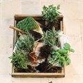 Characteristics of Herbs