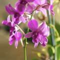 How to Clone Orchids