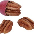 How to Care for Pecan Trees in the Fall