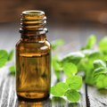 Peppermint Oil for Ant Control
