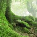 Moss Facts