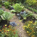 Guide to Planting a Vegetable Garden in Texas