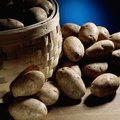 How to Grow Hydroponic Potatoes