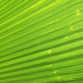 How to Keep Cut Palm Leaves Green