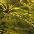 Weeds That Look Like Pine Trees