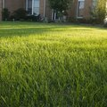 How to Convert a Gravel Yard to a Grass Yard