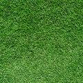Rye Grass Allergies