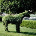 How to Make Animal Topiary Wire Frames