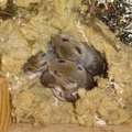 How to Identify Rodents by Their Droppings