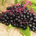 What Do Elderberries Taste Like?