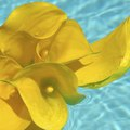 How to Make a Floating Pool Flower Arrangement