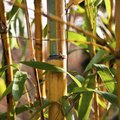 How to Get Rid of Bamboo