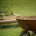 Hemlock vs. Cedar Mulch