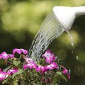 What Temperature Should Water be at When Watering Plants?