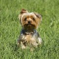 Tolerant Types of Grass for Dog Owners