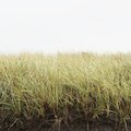 How to Determine Grass Types
