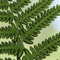 Interesting Facts About Ferns