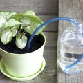 How Does a Self-Watering Planter Work?
