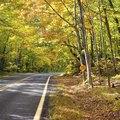 Michigan Tree Leaf Identification Guide
