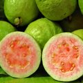 Types of Guava Trees