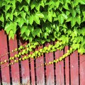 Cheap Privacy Fencing Ideas