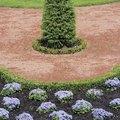 How to Grow Emerald Green Arborvitae in Pots