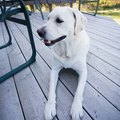 How to Clean Paw Prints Off of a Deck
